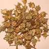 Tribulus acts as an aphrodisiac in males. Ayurveda has always recognized this herb for its ability to increase testosterone levels in men. The herb is not a hormone supplement that causes the body to produce testosterone in excessive quantities. On the other hand, Tribulus increases the amount of Luteinizing Hormone (LH) produced by the body's pituitary gland. LH stimulates the testes to secrete testosterone. Thus by promoting production of the body's own hormones, it works only within the body's natural limits to help men increase and sexual energy and drive. Certain studies in different parts of Europe have also affirmed the fact that Tribulus can effectively address partial erectile dysfunction and lack of libido. Further studies also proved that increase in testosterone levels were noticed after just 5 days use of this herb.